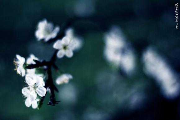 http://japonaddict.cowblog.fr/images/1969851015022360396492279972992191688927562173n-copie-1.jpg